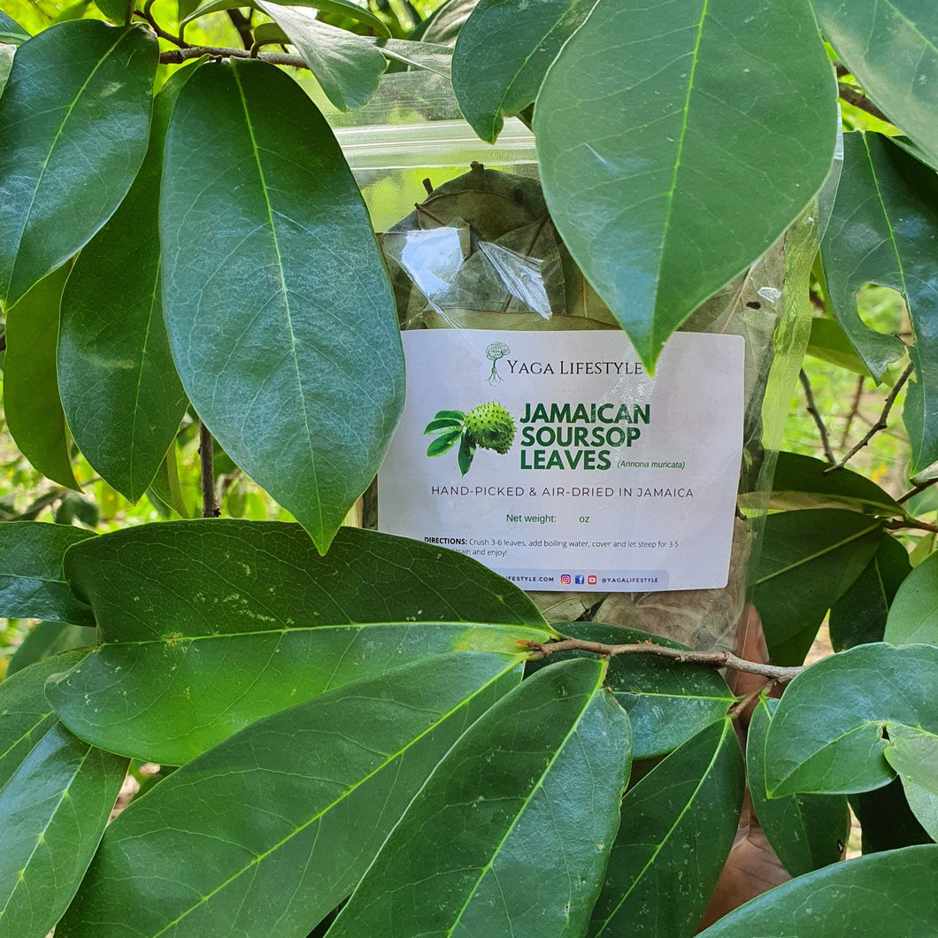 Jamaican Soursop Leaves (Hand-picked, Air-dried and powdered)
