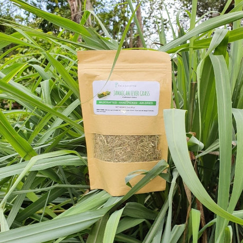 Jamaican Fever Grass (Lemon Grass)