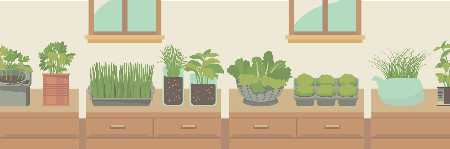 Plants in Small Spaces