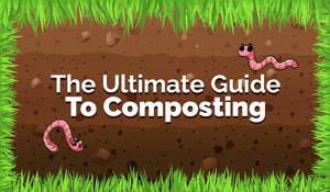 The Ultimate Guide To Composting