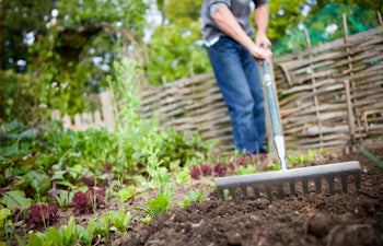 5 Gardening Hacks for the Fall