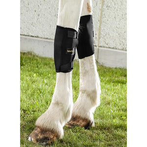 Back on Track Therapeutic Horse Knee Boots