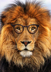 lion wearing psir wooden glasses