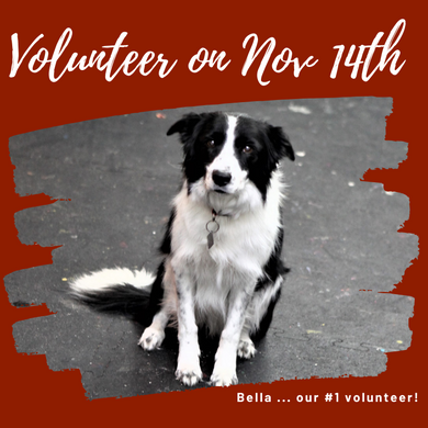 Volunteer on November 14th