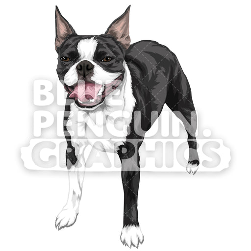 Boston Terrier Dog Version 2 Vector Clipart Illustration - Blue Penguin Graphics