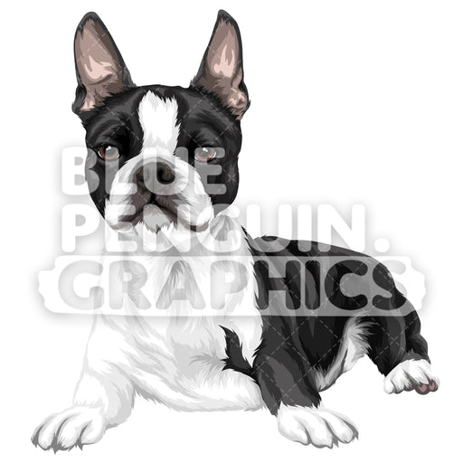 Boston Terrier Dog Version 8 Vector Clipart Illustration - Blue Penguin Graphics