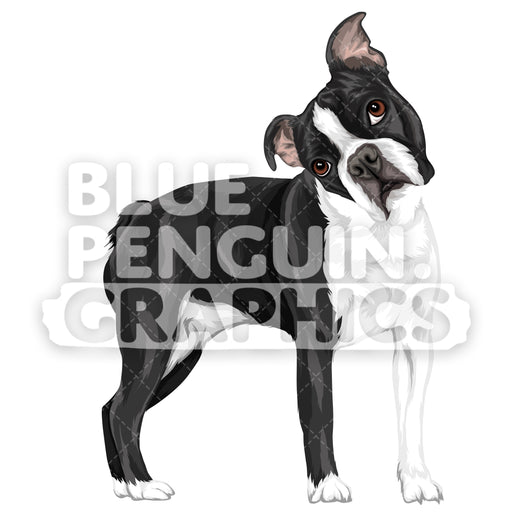 Boston Terrier Dog Version 9 Vector Clipart Illustration - Blue Penguin Graphics