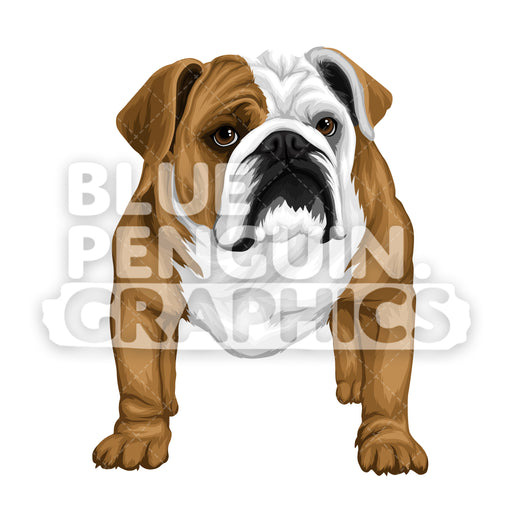 Bulldog version 2 Vector Cartoon Clipart Illustration - Blue Penguin Graphics