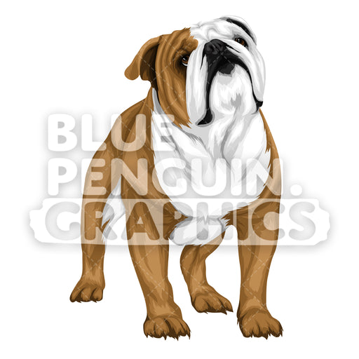 Bulldog version 3 Vector Cartoon Clipart Illustration - Blue Penguin Graphics