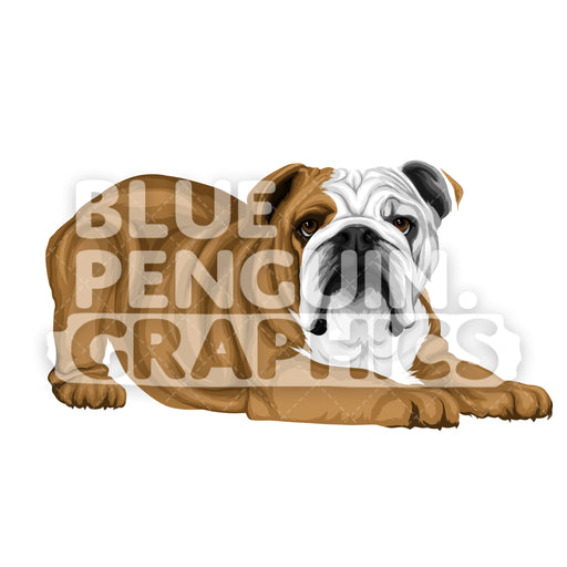 Bulldog version 6 Vector Cartoon Clipart Illustration - Blue Penguin Graphics