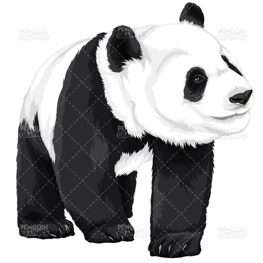 Cute Panda Version 6 Vector Clipart Illustration - Blue Penguin Graphics