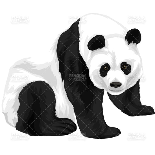 Cute Panda Version 7 Vector Clipart Illustration - Blue Penguin Graphics