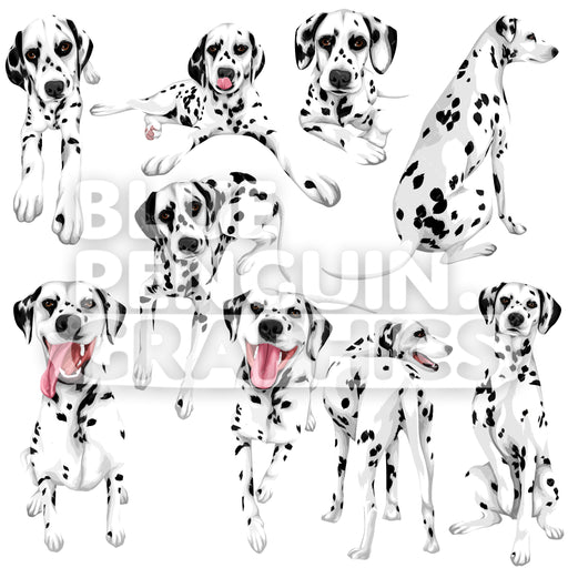 Dalmatian Dog Bundle Set Vector Clipart - Blue Penguin Graphics