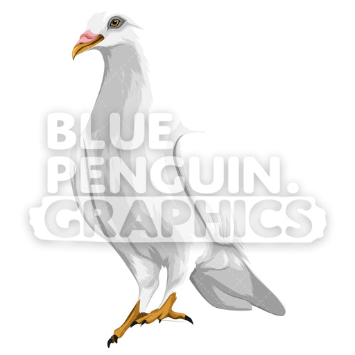 Realistic Dove Version 8 Vector Clipart Illustration - Blue Penguin Graphics