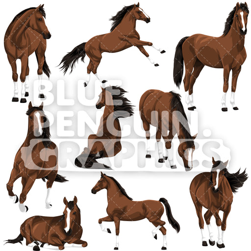 Realistic Horse Bundle Set Vector Clipart - Blue Penguin Graphics