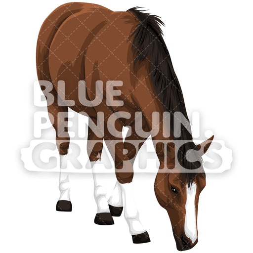 Realistic Horse Version 6 Vector Clipart Illustration - Blue Penguin Graphics