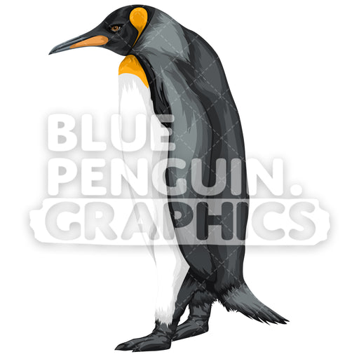 King Penguin Version 8 Vector Clipart Illustration - Blue Penguin Graphics
