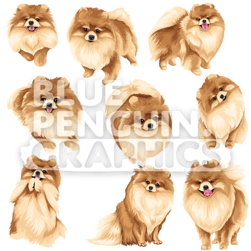 Pomeranian Bundle Set Vector Clipart - Blue Penguin Graphics