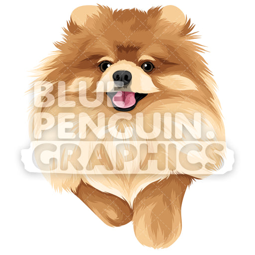 Pomeranian Version 1 Vector Clipart Illustration - Blue Penguin Graphics