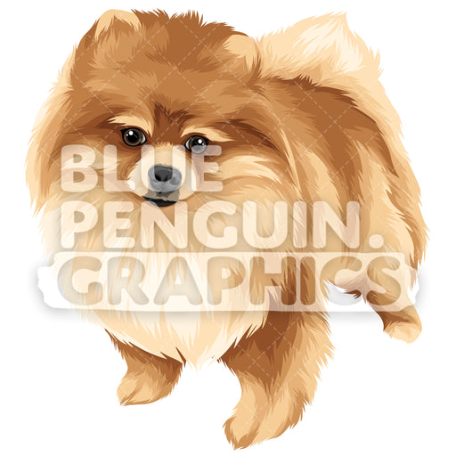 Pomeranian Version 2 Vector Clipart Illustration - Blue Penguin Graphics