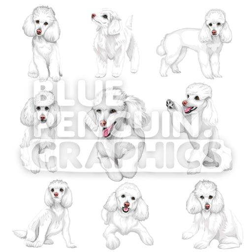 Poodle Dog Bundle Set Vector Clipart - Blue Penguin Graphics