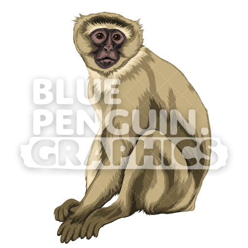 Vervet Monkey Version 1 Vector Clipart Illustration - Blue Penguin Graphics