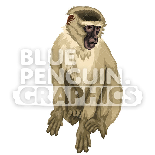 Vervet Monkey Version 4 Vector Clipart Illustration - Blue Penguin Graphics