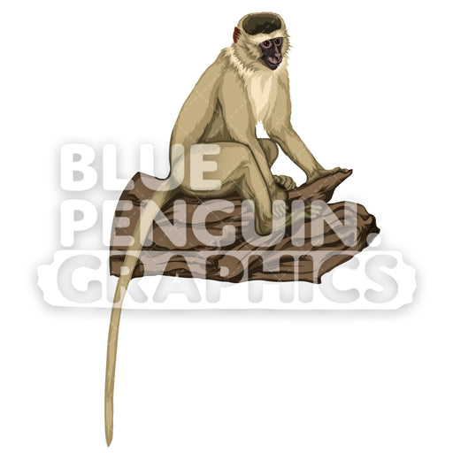 Vervet Monkey Version 7 Vector Clipart Illustration - Blue Penguin Graphics