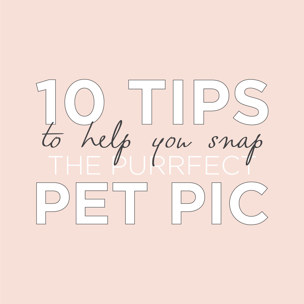 PAWTOGRAPHY TIPS TO HELP YOU SNAP THE PURRFECT PET PIC!