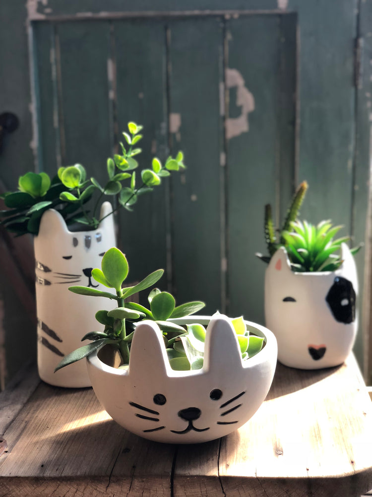MINKY CAT POT