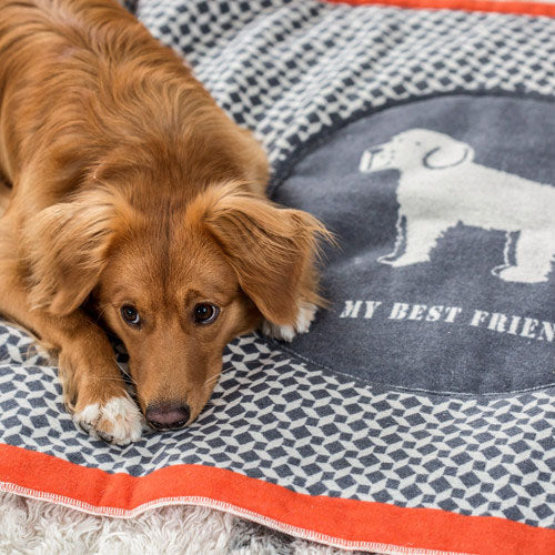 MY BEST FRIEND PADDED DOG BLANKET