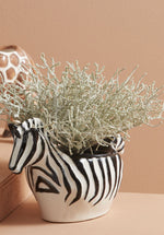 ZEBRA - SAFARI BOWL/PLANTER