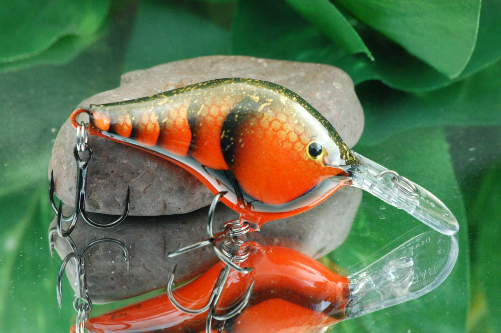 Orange Scaled Craw