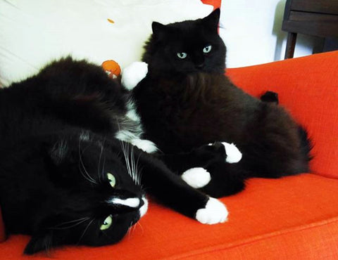 Image of cats sitting on an armchair
