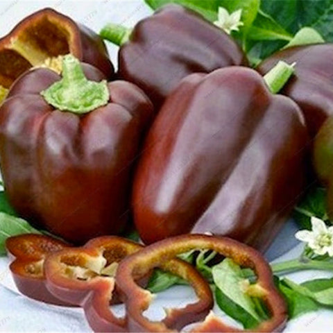 Sweet Rainbow Pepper Colour Seeds