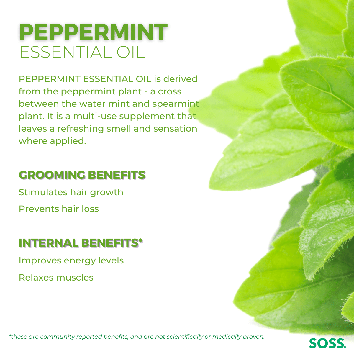 Peppermint Essential Oil can increase circulation and promote hair growth.