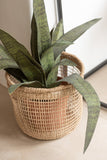 Set De 5 Panier Oasis Zostere Naturel Clair Baskets Oasis Seagrass Natural