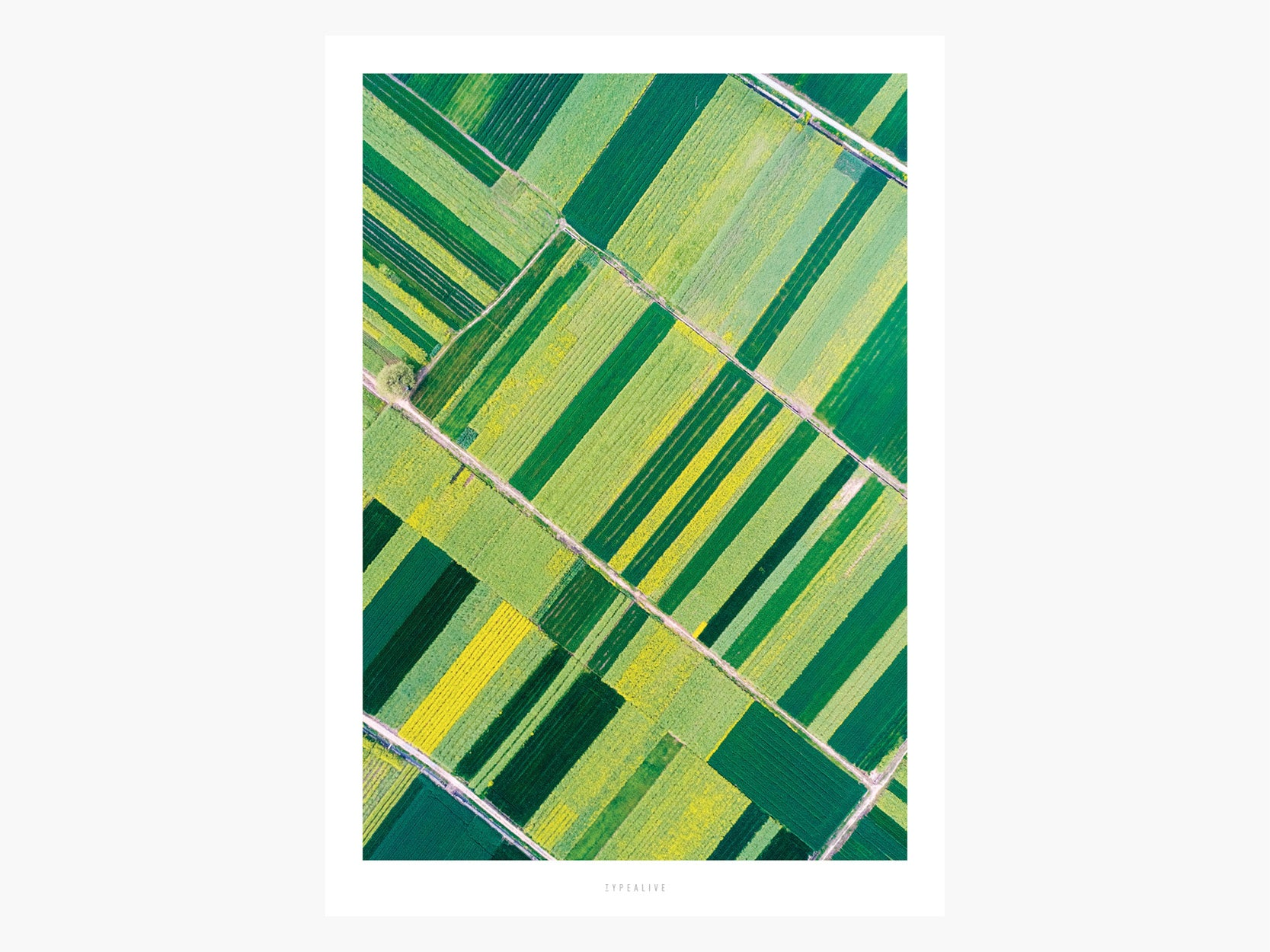 Print / Above The Fields No. 3