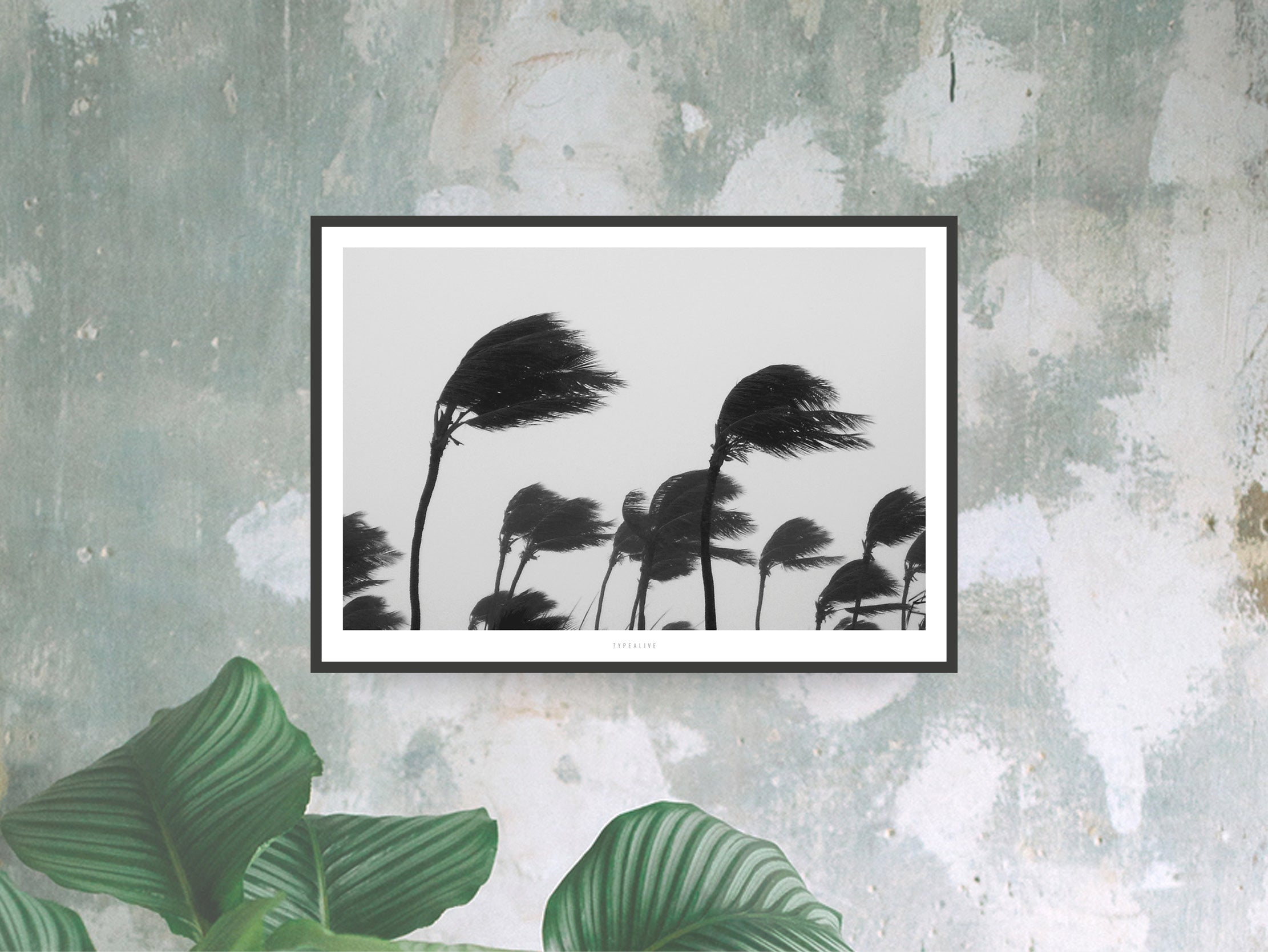 Print / All About Palms No. 11