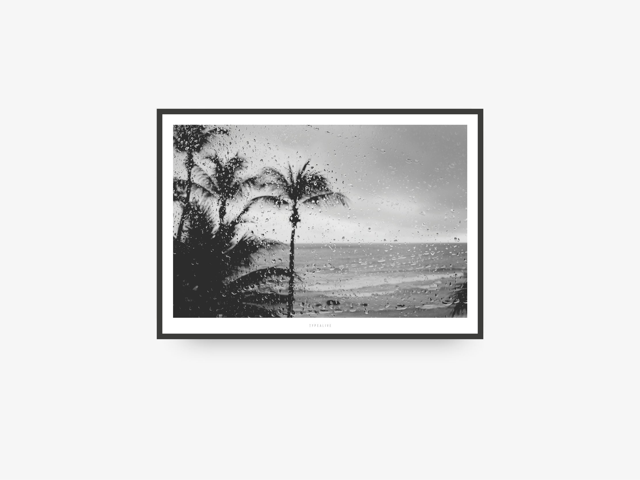 Print / All About Palms No. 12