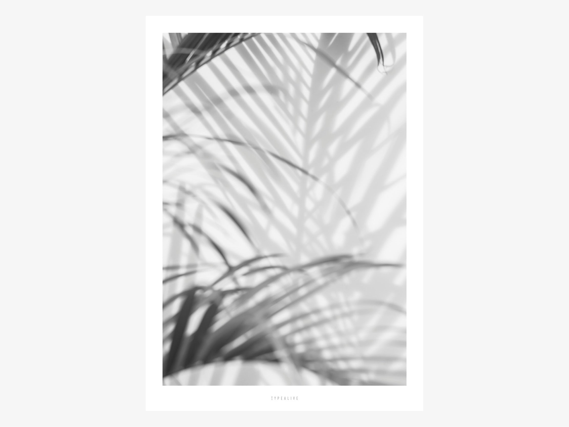 Print / All About Palms No. 2