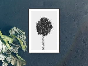 Print / All About Palms No. 8