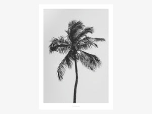 Print / All About Palms No. 9