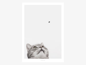 Print / Cat And Fly
