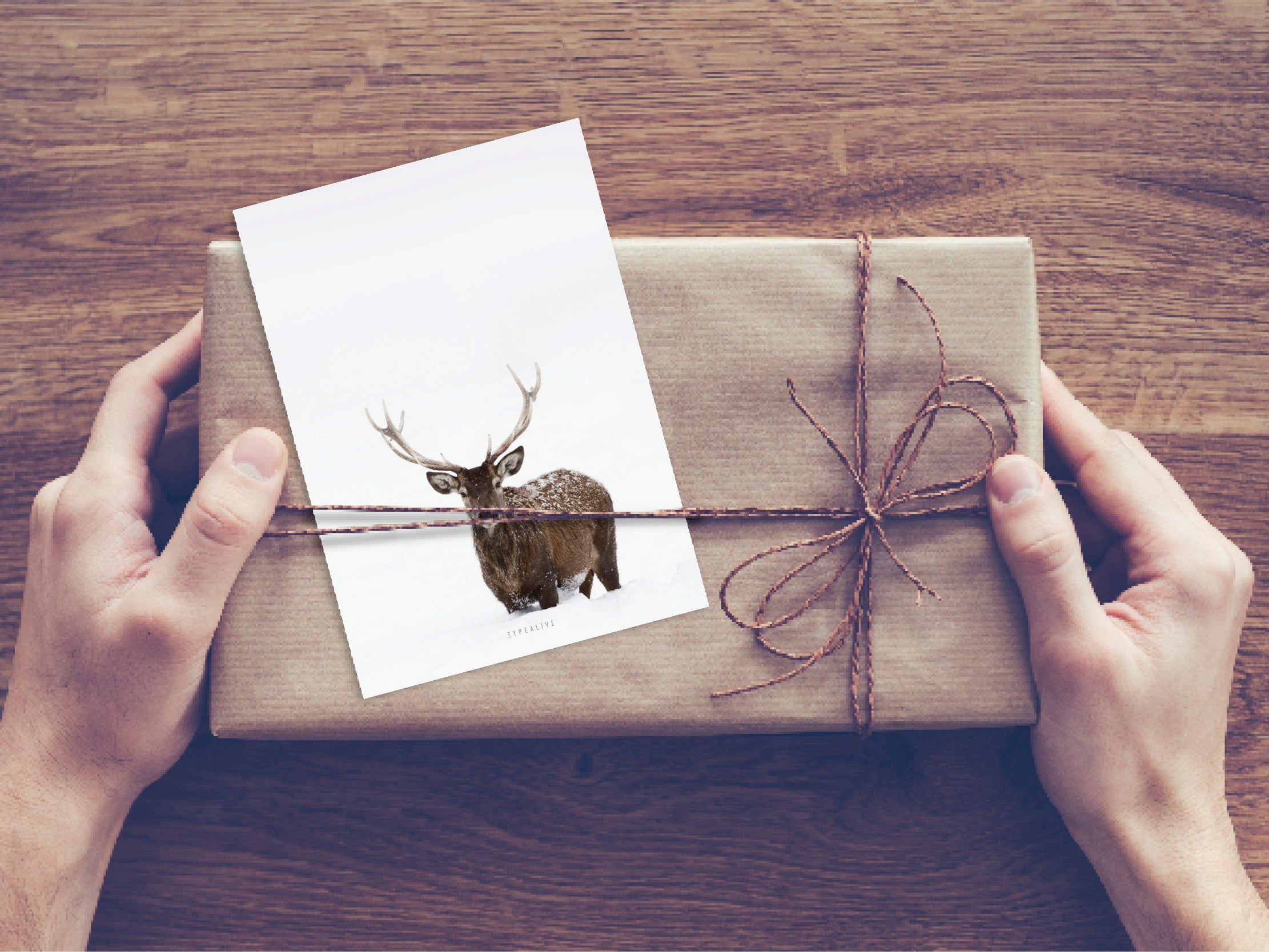 Postkarte / Deer No. 2
