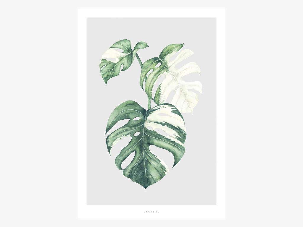 Print / Tropical No. 5