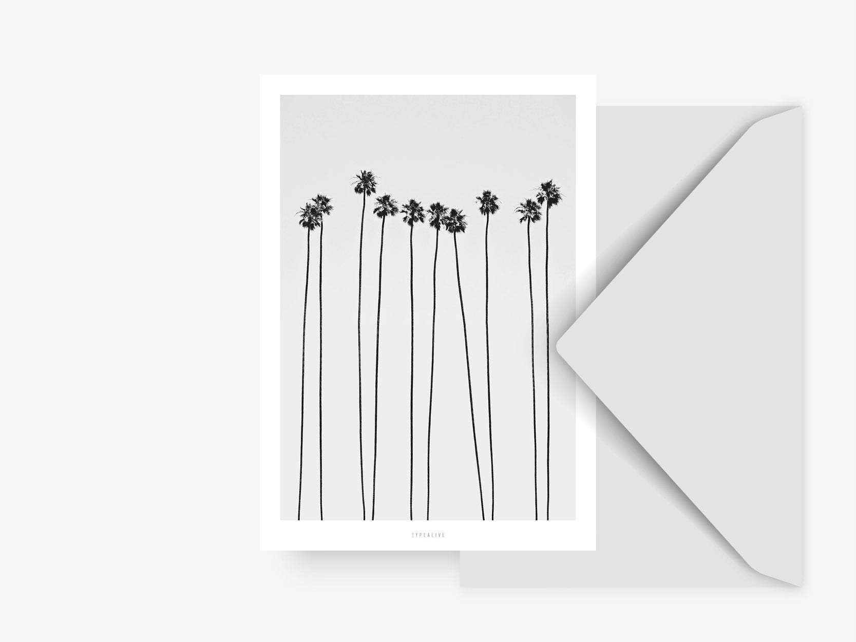 Postkarte / All About Palms No. 5