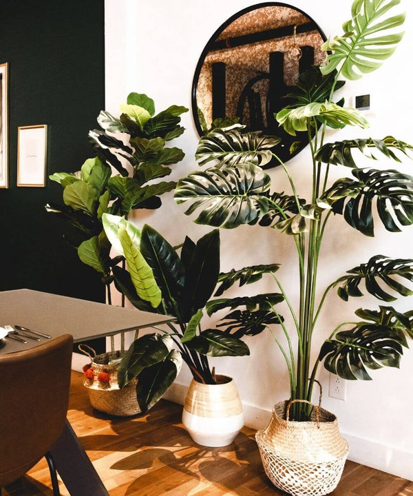 Benefits of Having Faux Plants Around You