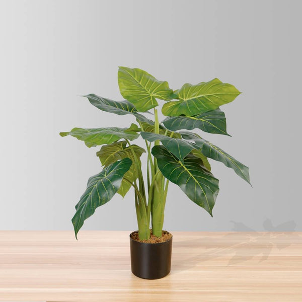Why Is It a Good Idea to Have Fake Plants Rather Than Reals ?