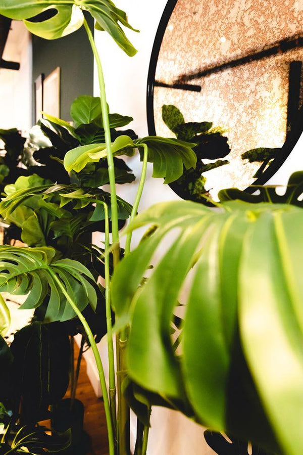 How to decorate your home with indoor silk plants | Artiplanto